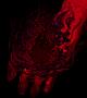 dark_hand.png